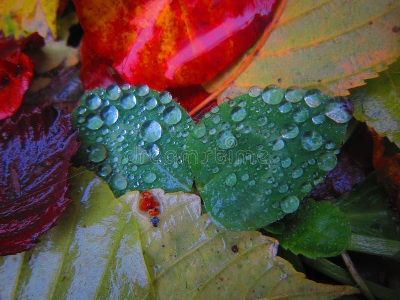 Natura magica fotografia stock libera da diritti