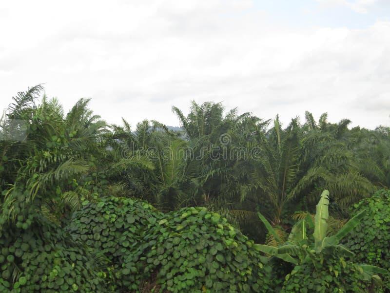 Natura in Malesia immagine stock libera da diritti