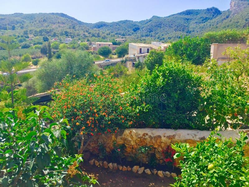 Natura Mallorca fotografie stock
