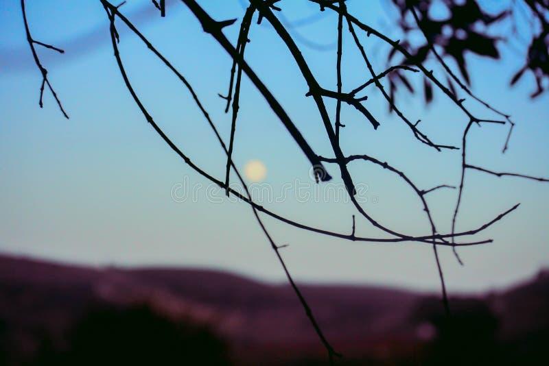 Natura marocchina fotografia stock