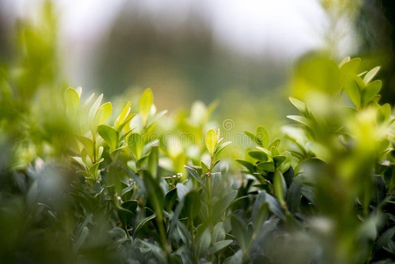 Natura mikrokosmos obrazy stock