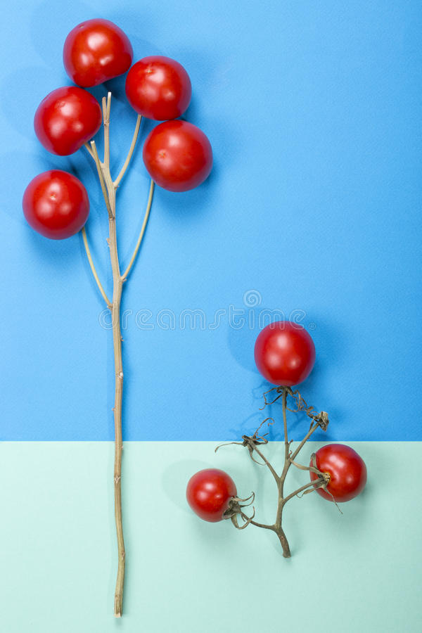 Natura morta astratta con i pomodori ed i rami fotografia stock