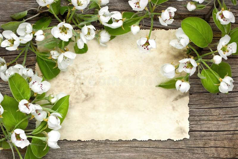 Natura morta con i fiori della mela del fiore della molla immagini stock libere da diritti