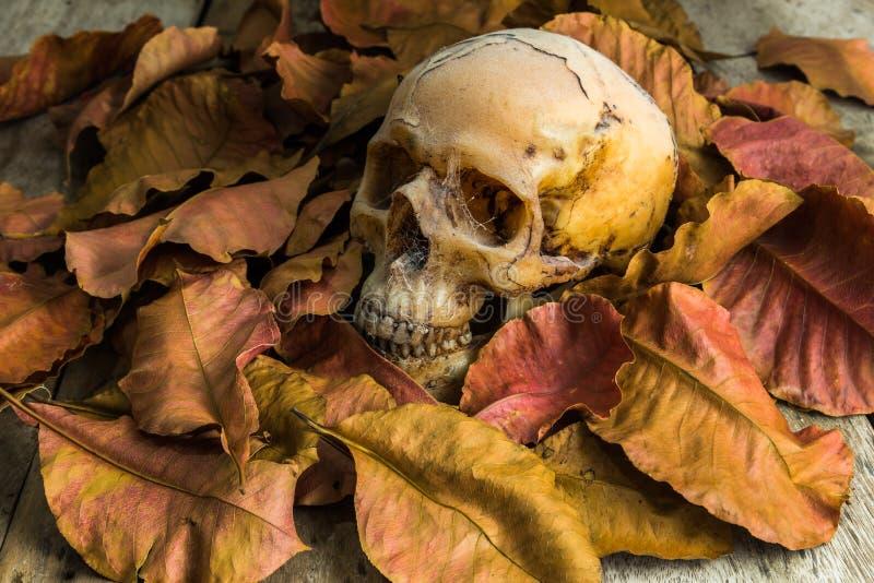 Natura morta con il cranio fotografie stock
