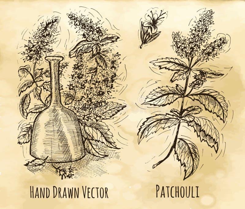 Natura morta con la bottiglia di profumo e del pachouli illustrazione vettoriale