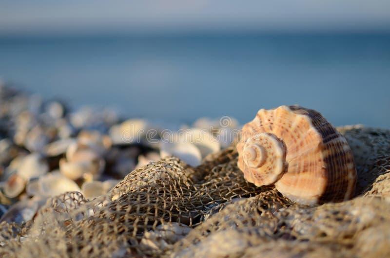 Natura morta con la conchiglia e la rete da pesca sulla spiaggia tropicale fotografia stock
