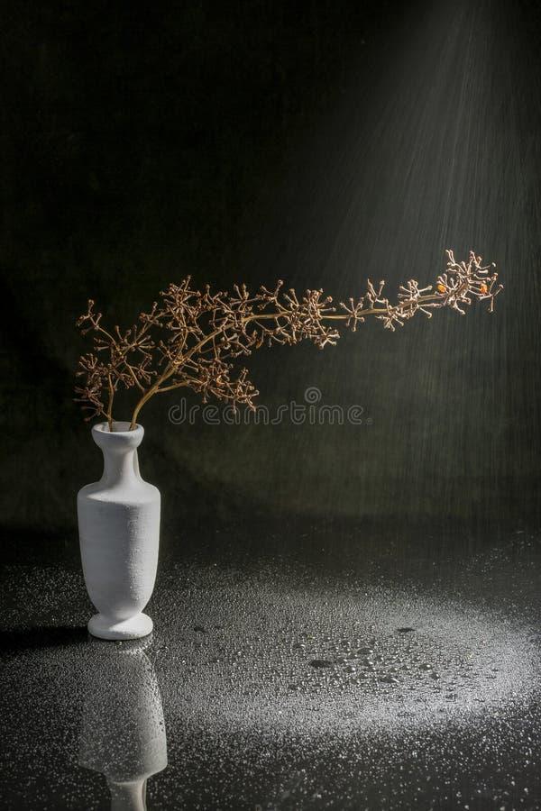 Natura morta con un vaso bianco e un ramo asciutto dell'uva fotografia stock libera da diritti