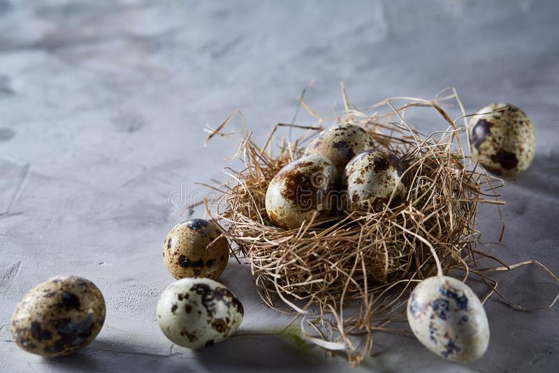 Natura morta concettuale con le uova di quaglia nel nido del fieno sopra fondo grigio, fine su, fuoco selettivo immagini stock
