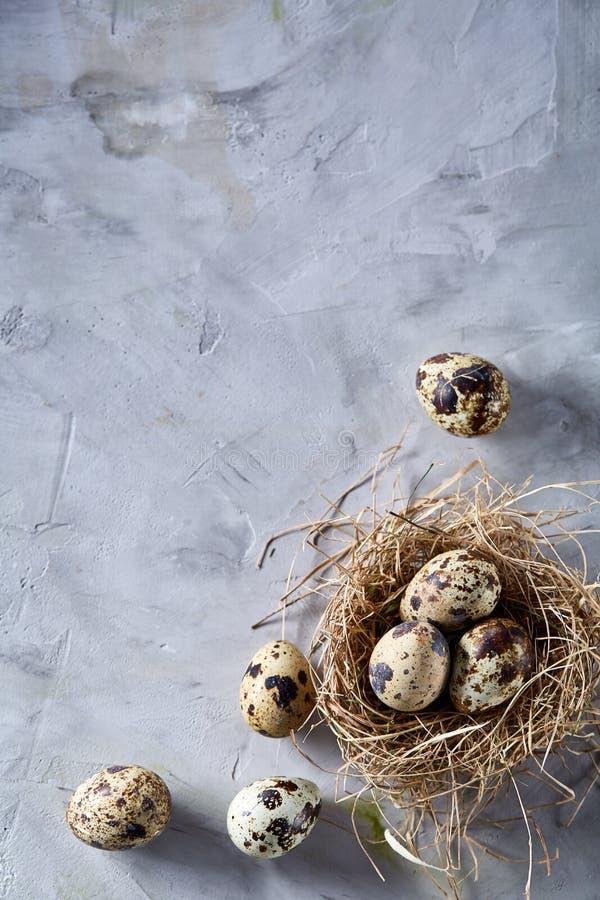 Natura morta concettuale con le uova di quaglia nel nido del fieno sopra fondo grigio, fine su, fuoco selettivo, verticale fotografie stock libere da diritti
