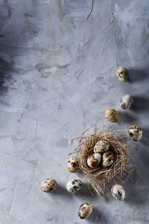 Natura morta concettuale con le uova di quaglia nel nido del fieno sopra fondo grigio, fine su, fuoco selettivo, verticale fotografia stock libera da diritti