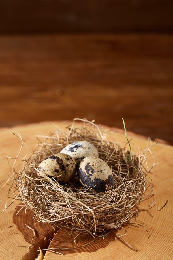 Natura morta concettuale con le uova di quaglia nel nido del fieno su un ceppo, fine su, fuoco selettivo immagini stock libere da diritti