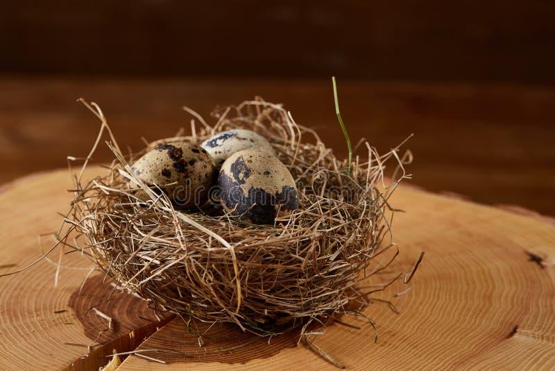 Natura morta concettuale con le uova di quaglia nel nido del fieno su un ceppo, fine su, fuoco selettivo immagine stock