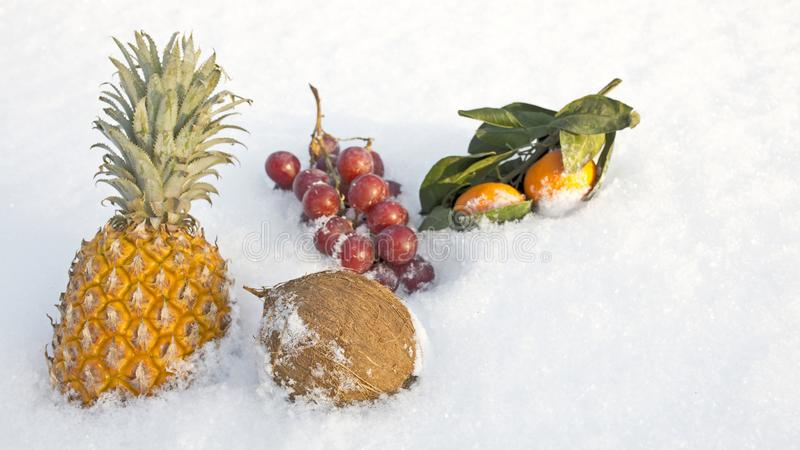 Natura morta degli agrumi in neve fotografia stock