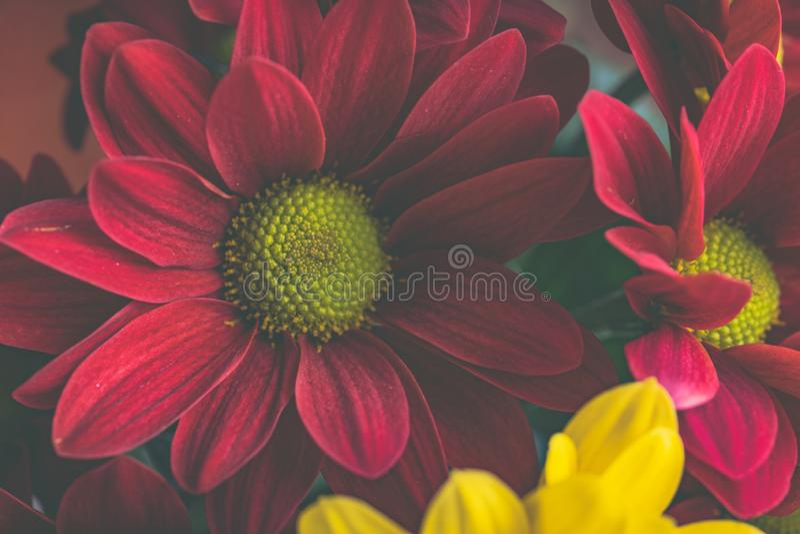 Natura morta dei fiori rossi e gialli fotografia stock libera da diritti