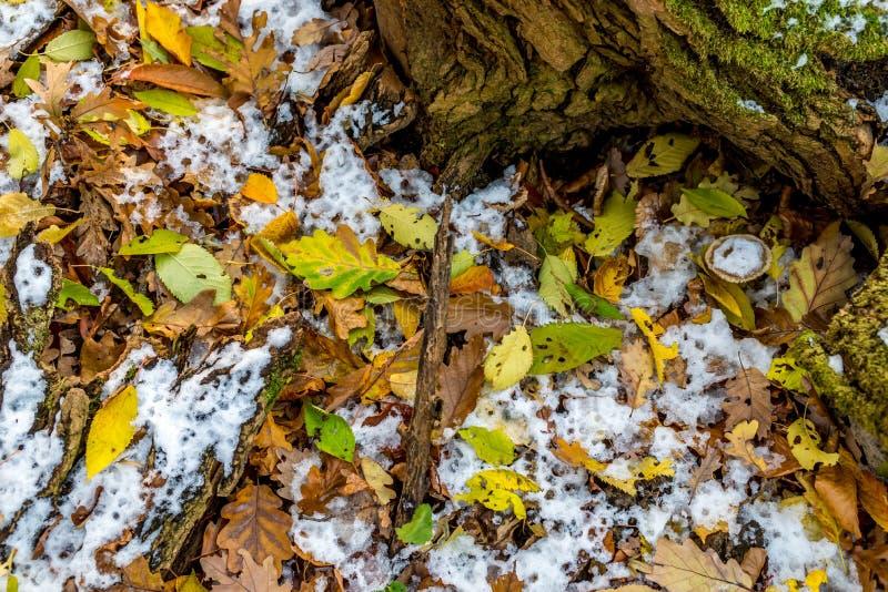 Natura morta della foresta, con neve in anticipo e fogliame di autunno coperto fotografie stock libere da diritti