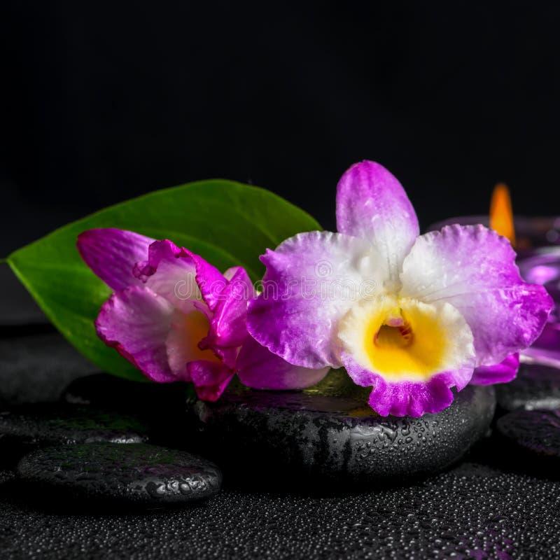 Natura morta della stazione termale del dendrobium porpora dell'orchidea, lil verde della calla della foglia fotografia stock libera da diritti