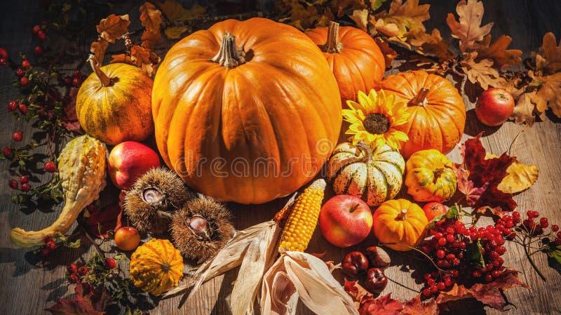 Natura morta di autunno con le zucche, le pannocchie di granturco e le bacche fotografia stock libera da diritti