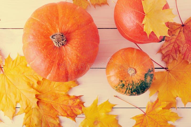 Natura morta di autunno, foglie di acero e zucche arancio immagine stock