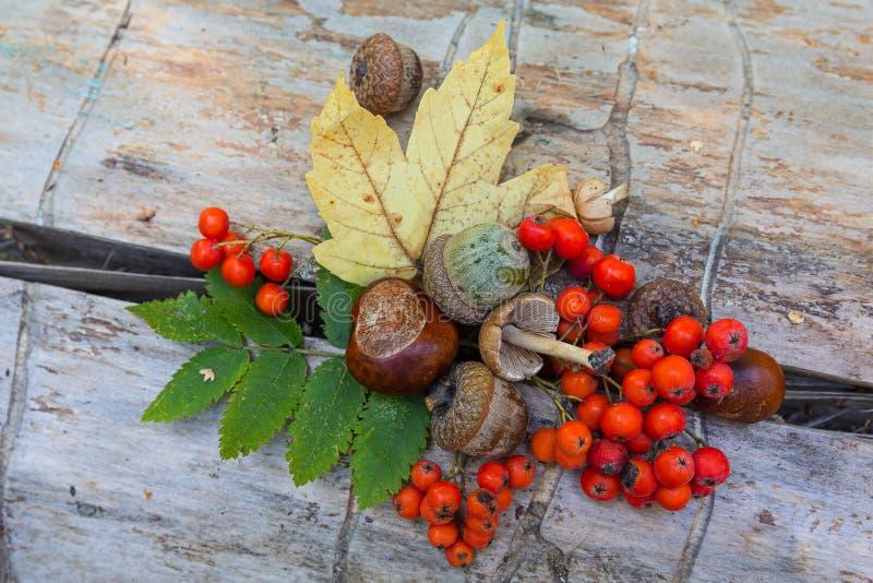 Natura morta di autunno sul vecchio tronco di albero fotografie stock libere da diritti