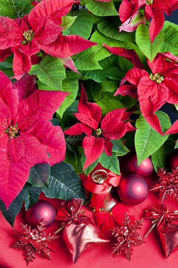 Natura morta di Natale con la stella di Natale fotografia stock