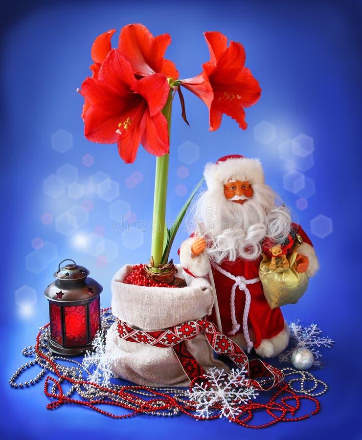 natura morta di Nuovo-anno con il hippeastrum ed il Babbo Natale immagini stock