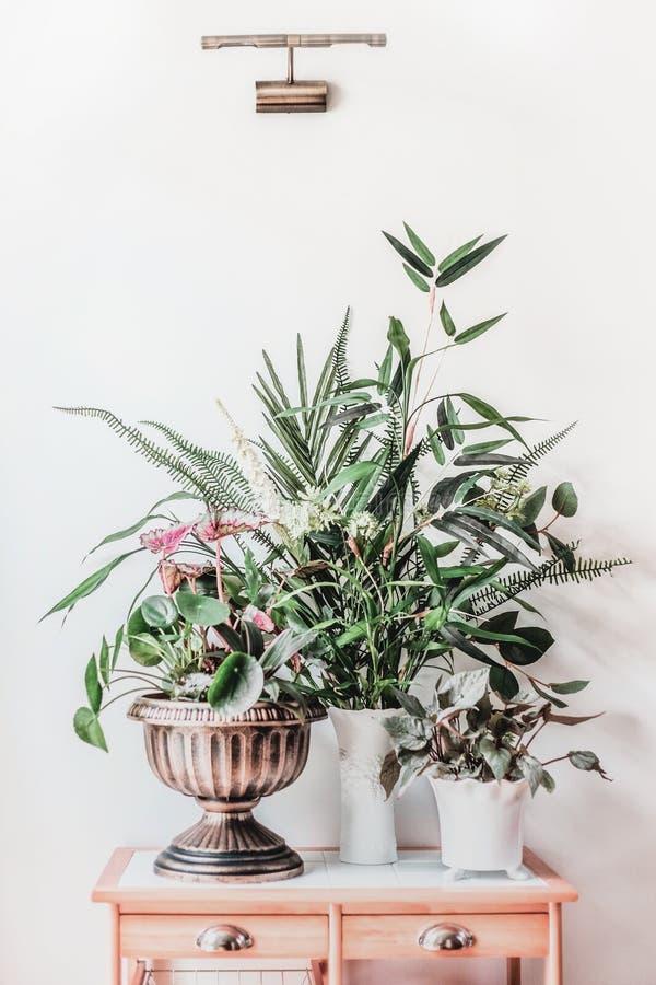 Natura morta moderna con le piante della casa in vasi e vaso dell'urna sulla tavola di legno, vista frontale Peperomioides del Pi fotografie stock libere da diritti