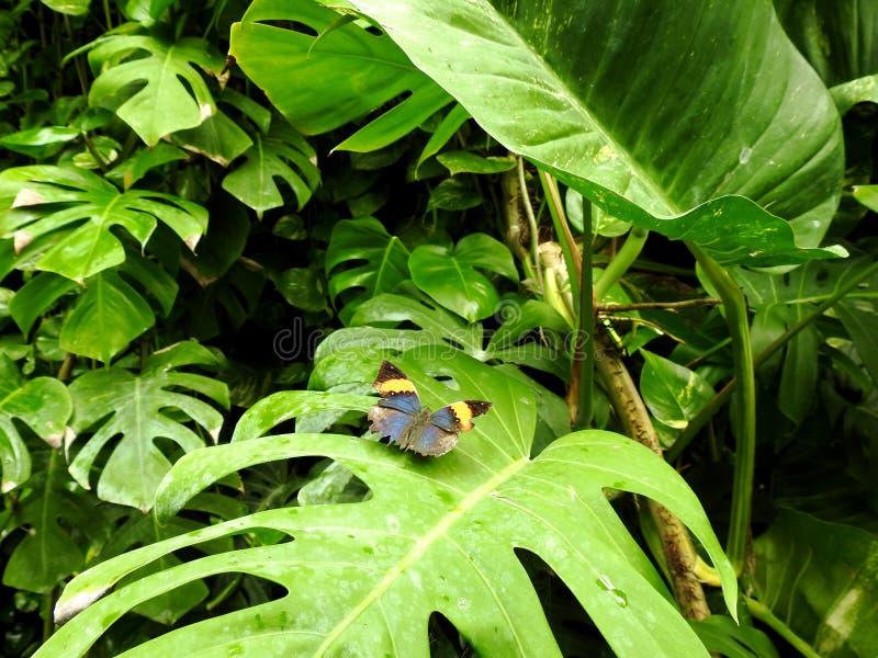 Natura & motyl fotografia stock