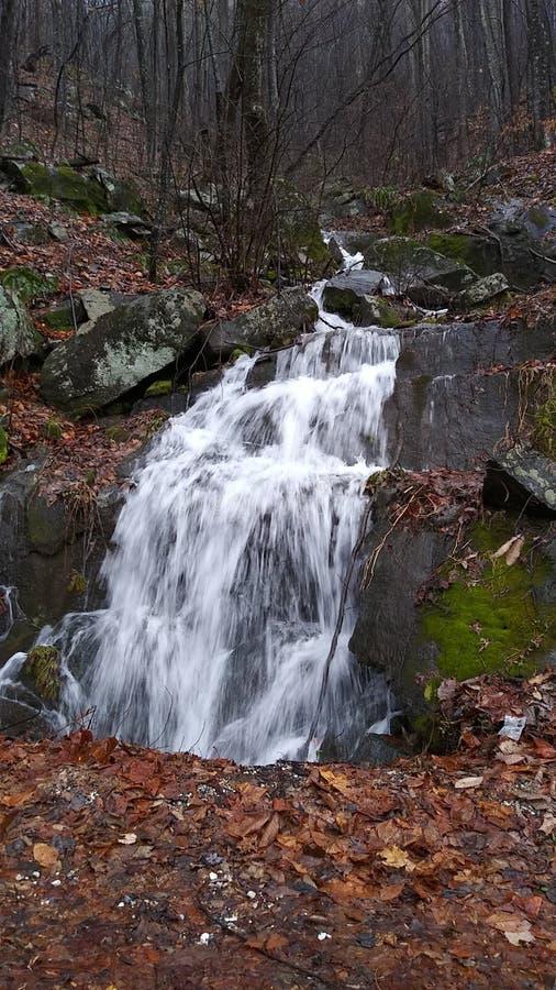 Natura, na zewnątrz właśnie codziennego piękna my don& x27; t wynagrodzenia uwaga obraz stock