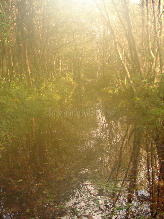Natura nel myst immagine stock