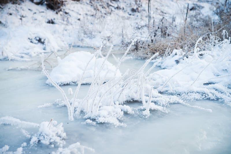 Natura nell'inverno, nevoso e gelido immagine stock libera da diritti
