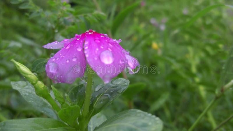 Natura nella pioggia immagine stock libera da diritti