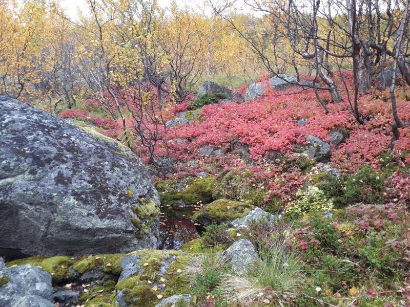 Natura Północny lato obrazy stock