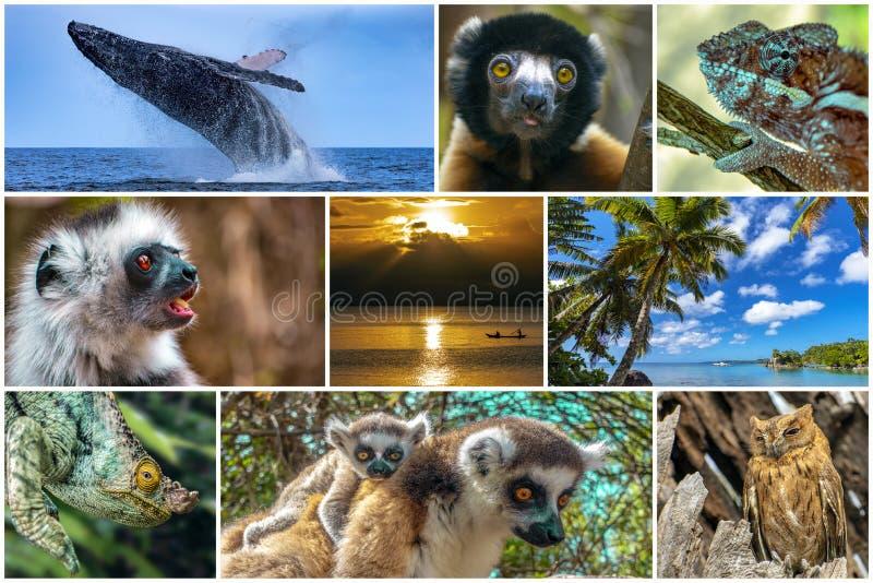 Natura, paesaggio, fauna selvatica del Madagascar - collage set immagini stock libere da diritti