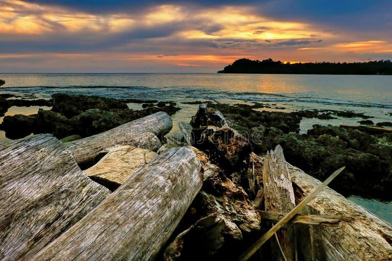 Natura Papua - nowa gwinea obrazy stock