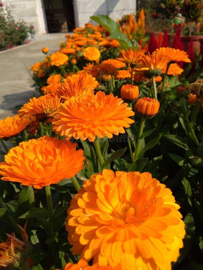 Natura Piękni kwiaty obraz stock
