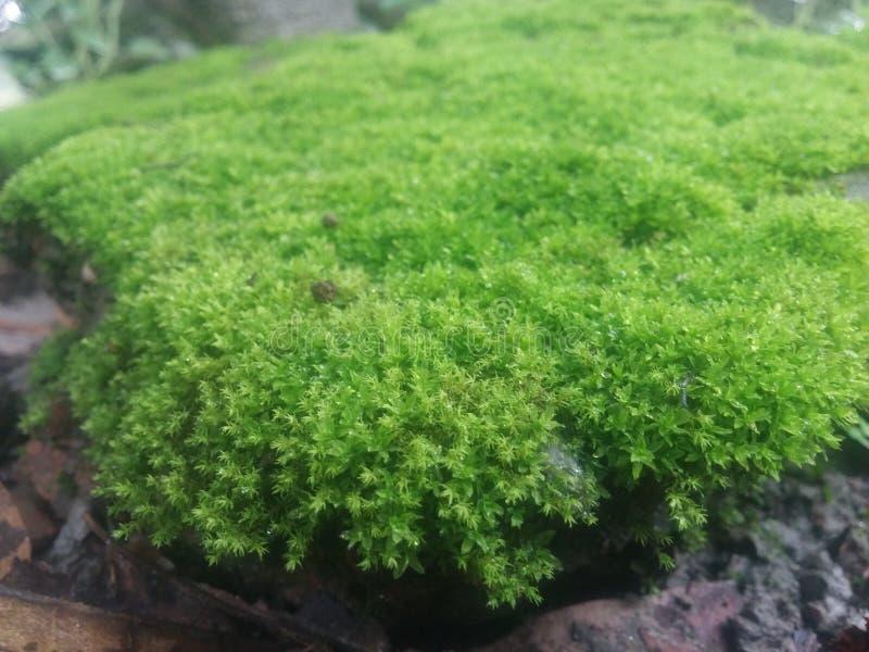 Natura piękno zdjęcia stock