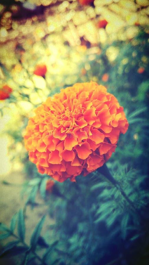 natura, piękno, perfect obraz royalty free