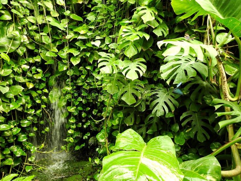 Natura, plantas da parede, vegetação, borboleta imagem de stock