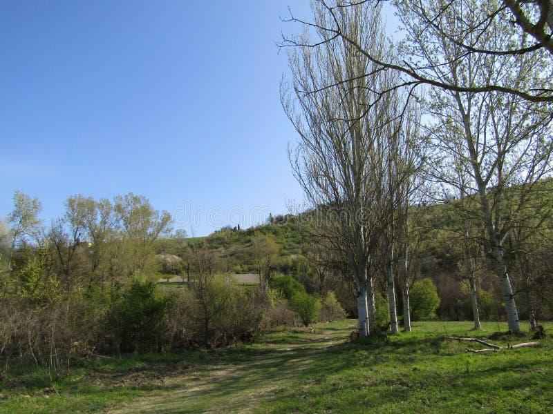 Natura potente in un parco in Di Reno di Casalecchio fotografie stock