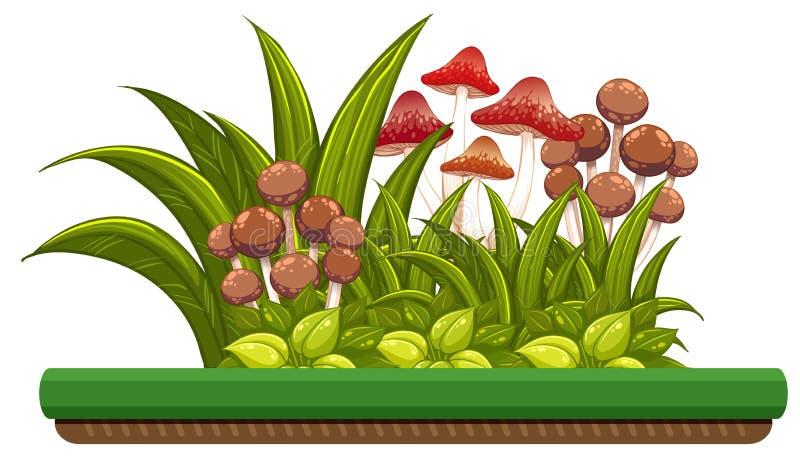 Natura przedmiot z pieczarkami ilustracji