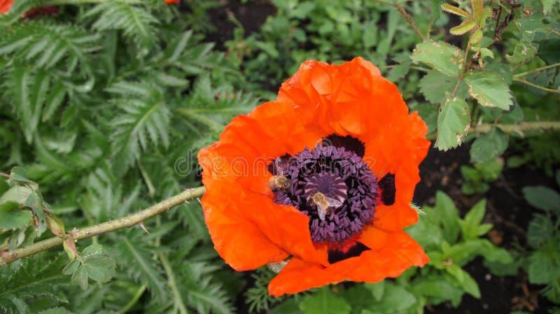 Natura, roślina, kwiaty, piękno, estetyka obraz royalty free