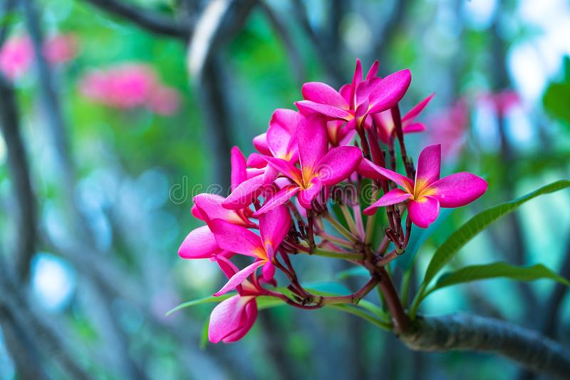 Natura, roślina, menchia kolor, kwiat, kwiat głowa, płatek, orchidea, świeżość, liść, piękno W naturze, zakończenie, botanika, ok zdjęcia royalty free