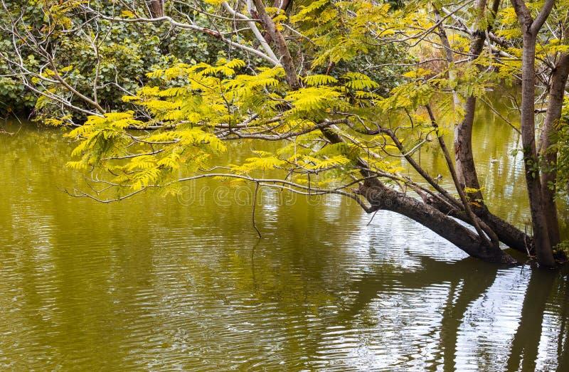 Natura rzeka z drzewem w wodzie zdjęcia royalty free