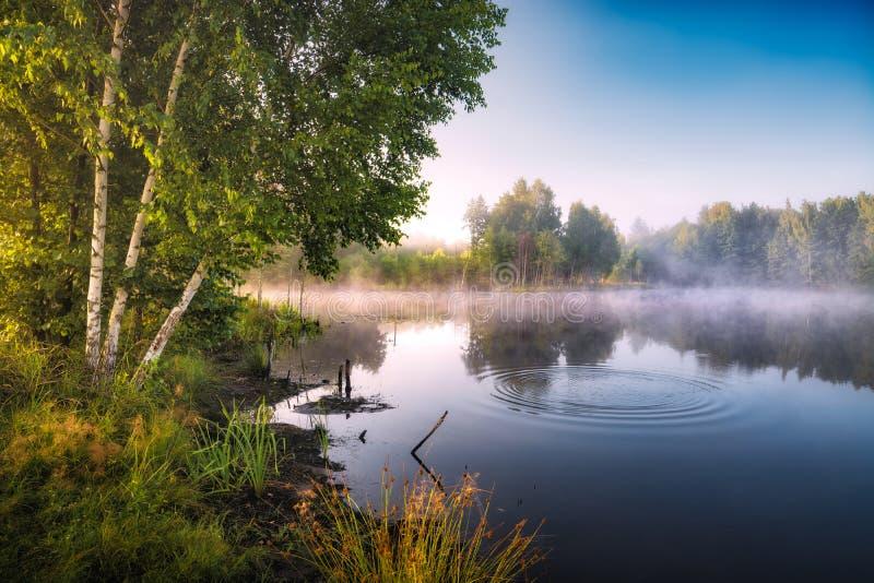 Natura selvaggia del terreno boscoso ucraino immagini stock