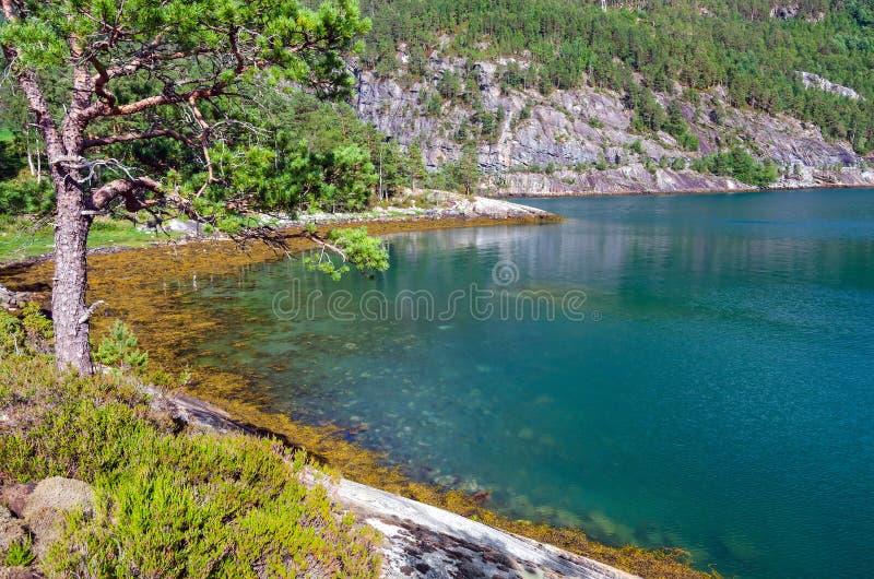Natura selvaggia norvegese nella stagione estiva immagini stock