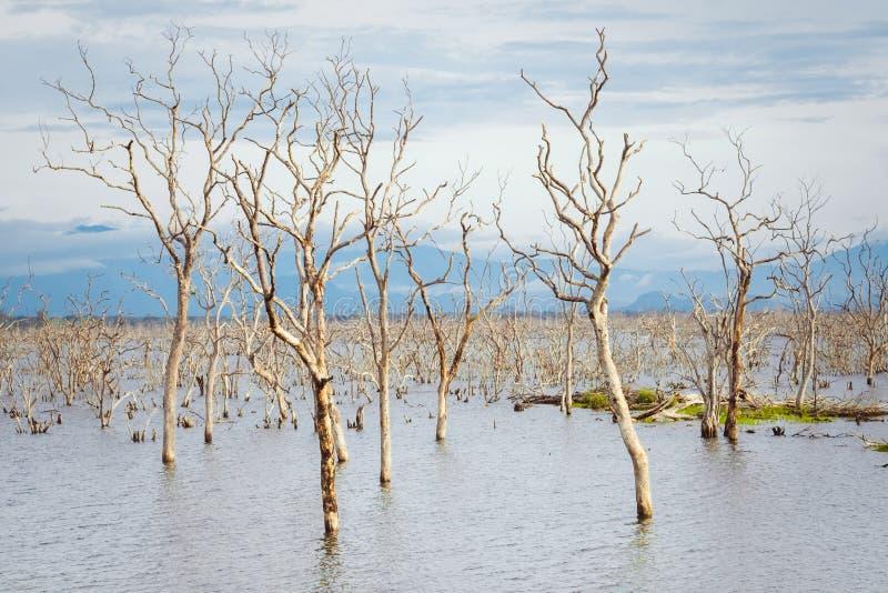 Natura selvaggia stupefacente del parco nazionale di Yala nello Sri Lanka fotografie stock