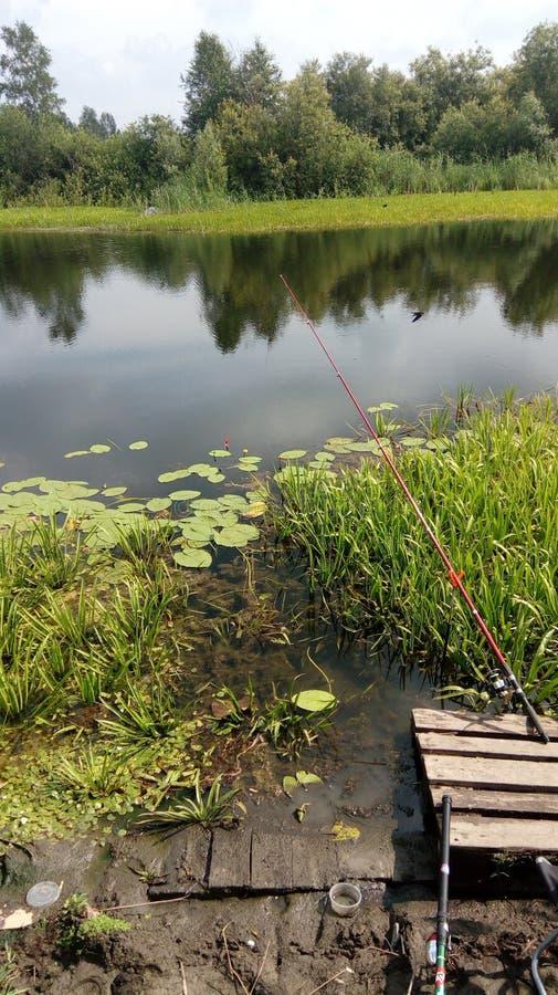 Natura siberiana di estate fotografia stock
