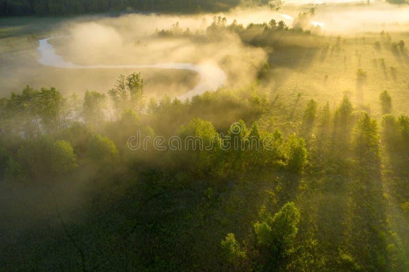 Natura soleggiata del fiume di estate nella mattina nebbiosa ad alba Vista aerea dei raggi luminosi del sole attraverso nebbia e  fotografia stock libera da diritti