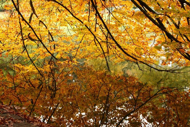 Natura sopra l'acqua fotografia stock
