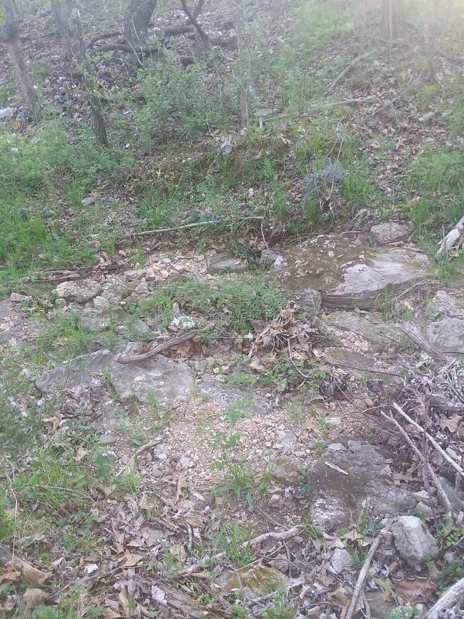Natura spacer zdjęcia stock